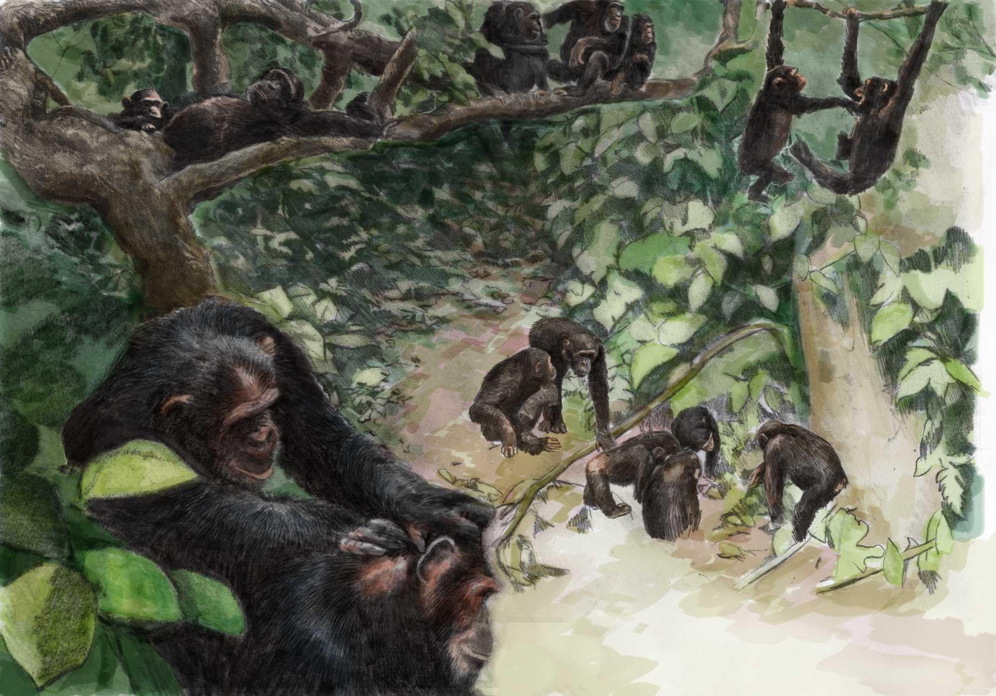 schimpansen-farbig
